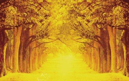 枫树林油画图片