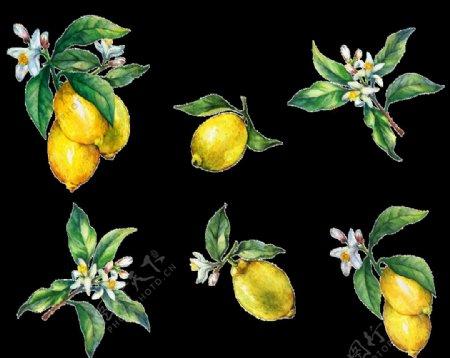 手绘柠檬图片
