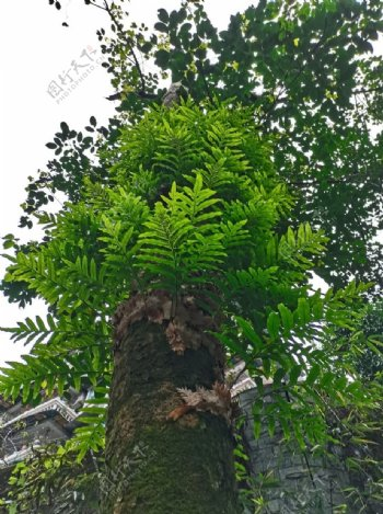 树木树叶图片