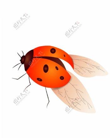 手绘矢量瓢虫图片