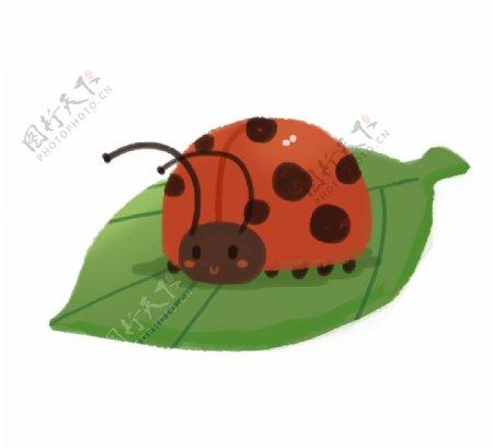 卡通瓢虫插画图片