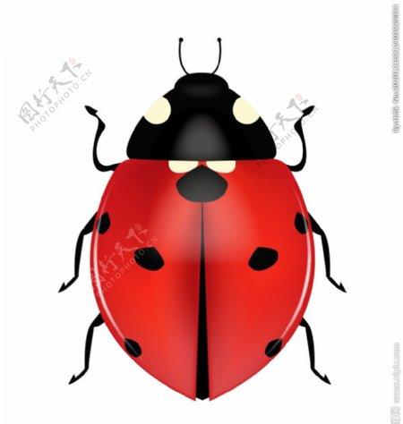 七星瓢虫插画图片