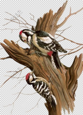 啄木鸟图片