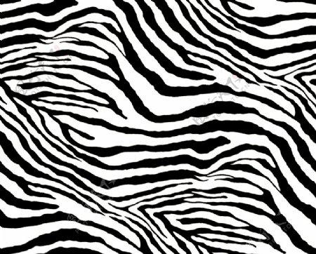 大牌数码印花豹纹斑马纹图片