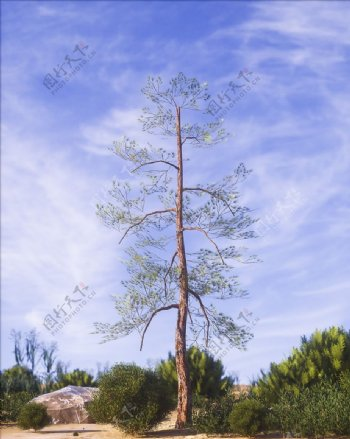 C4D模型高精度C4D树图片